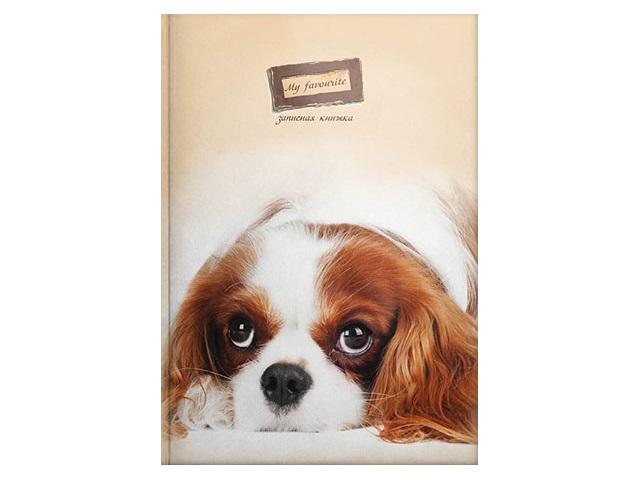 Записная книжка А6 тв/переплёт  48л Пушистый щенок Prof Press 48-4599