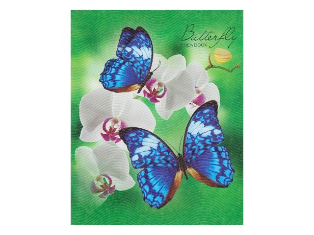 Тетрадь 48л клетка Бабочки с цветами Hatber 48Т5тC1_13416