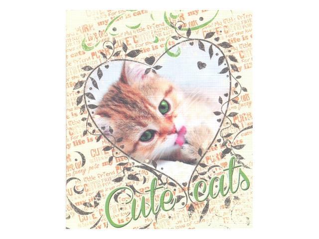 Тетрадь  48 л  #  Милые котята 48Т5тС1