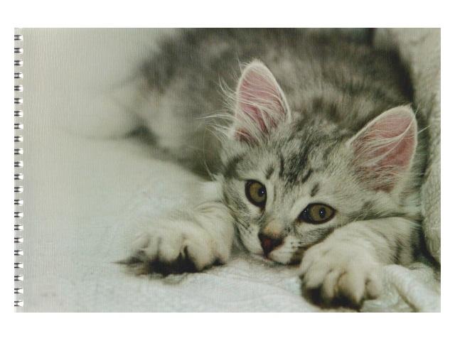 Альбом 48л А4 спираль лён Спящие кошки Академия Групп ЕАС-9091/2
