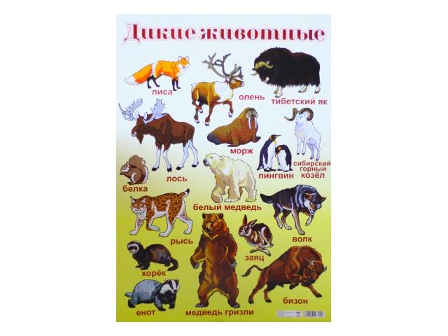 Плакат А2 Дикие животные Everest print 47469