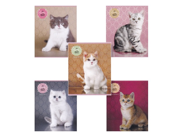 Тетрадь 48л линия Симпатичные котята-2 Prof Press 48-3278