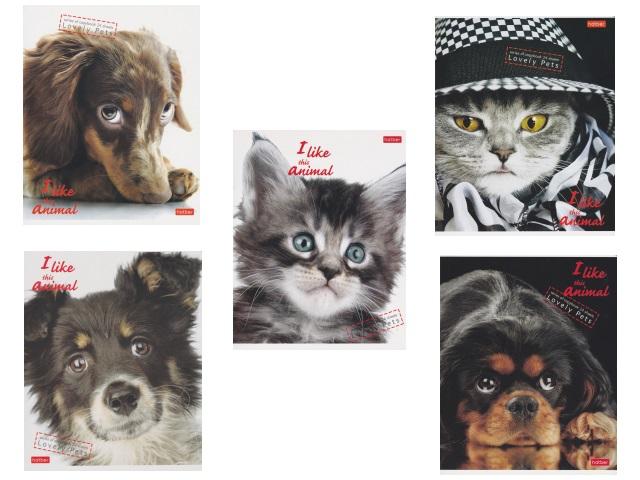 Тетрадь 24л линия Hatber I Like Animals 24Т5В2