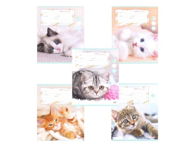 Тетрадь 24л линия Сонные котята Prof Press 24-4281