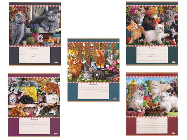 Тетрадь 12л линия Prof Press Очаровательные котята 12-4604