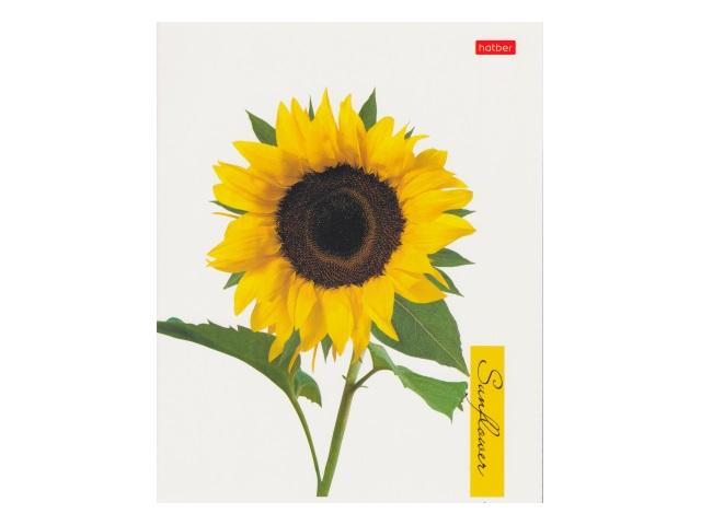 Тетрадь 80л клетка Hatber Sunflowers 80Т5лВ1