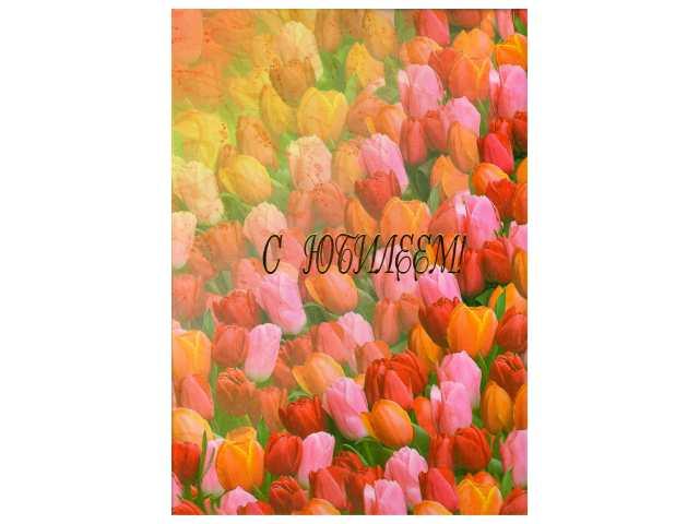 """Папка адресная """"С Юбилеем"""", А4, картон ламинированный, Тюльпаны, Имидж"""