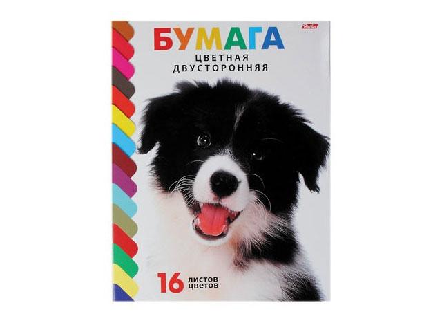Бумага цветная А4 16 листов 16 цветов двухсторонняя на скобе Щенок, Hatber 16Бц4_08053